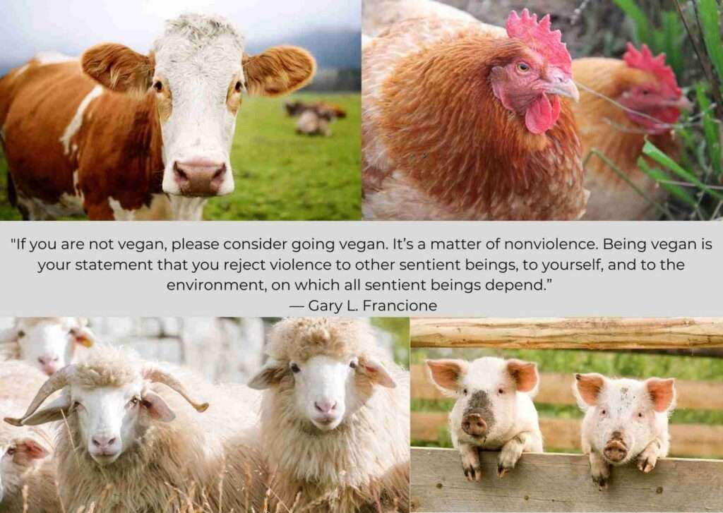 Veganism reduces animal abuse