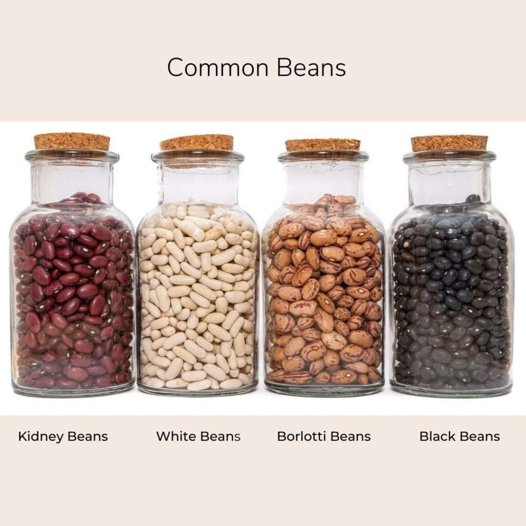 common-beans-planetary-concerns